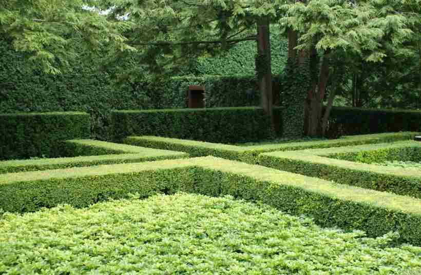 Быстрорастущая живая изгородь: 50 фото кустарников и деревьев